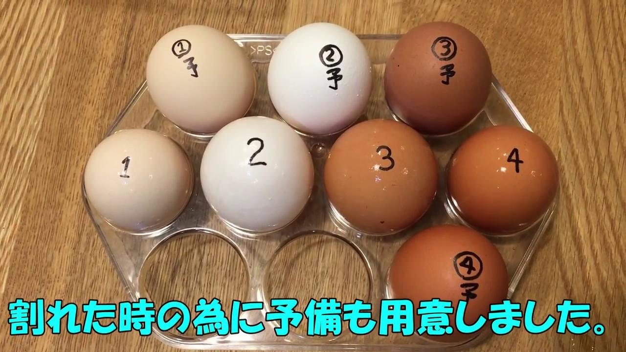 【実験・検証 生活の知恵】簡単に古い卵を調べる方法 1日目~ 毎日確認 この動画では1日目のみ