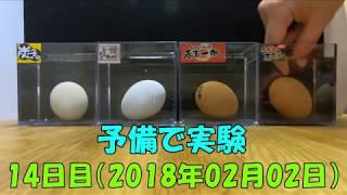 【生活の知恵】古い卵を簡単に見分ける方法 購入1日目~古くなるまで実験してみました。