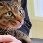 ≪ぺット手帳≫病気のときに役立つ猫ちゃんの体温と呼吸数の測り方
