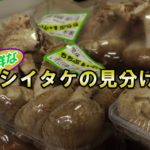 B-ぐるチャンネル『2018年度/お役立ち情報/新鮮な野菜の見分け方』