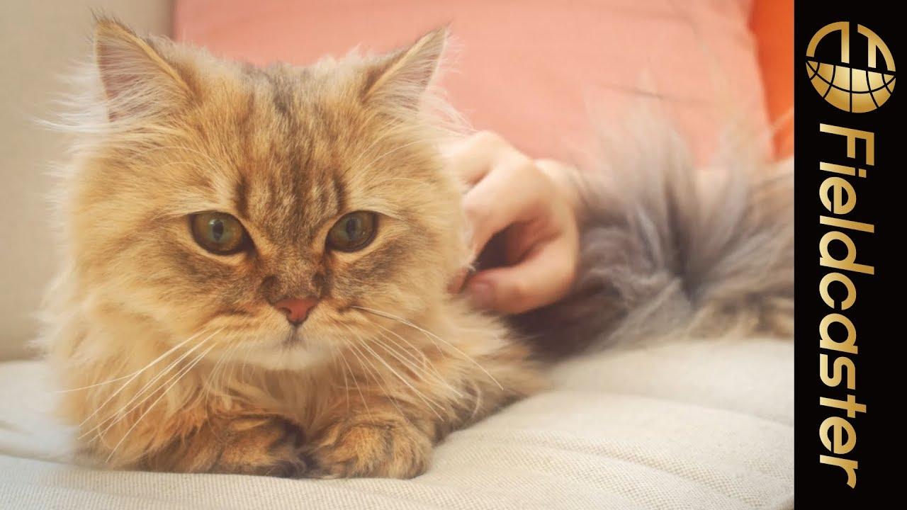 【癒し】猫を癒すために役立つ8の情報を紹介!「#ほっこりニャレンジ」